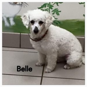 Belle-2