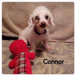 Connor-1