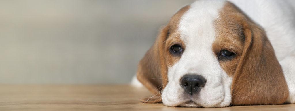 Dog puppy banner