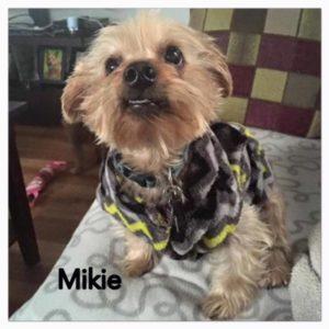 Mikie-1