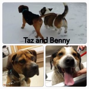 Taz-and-Benny-1